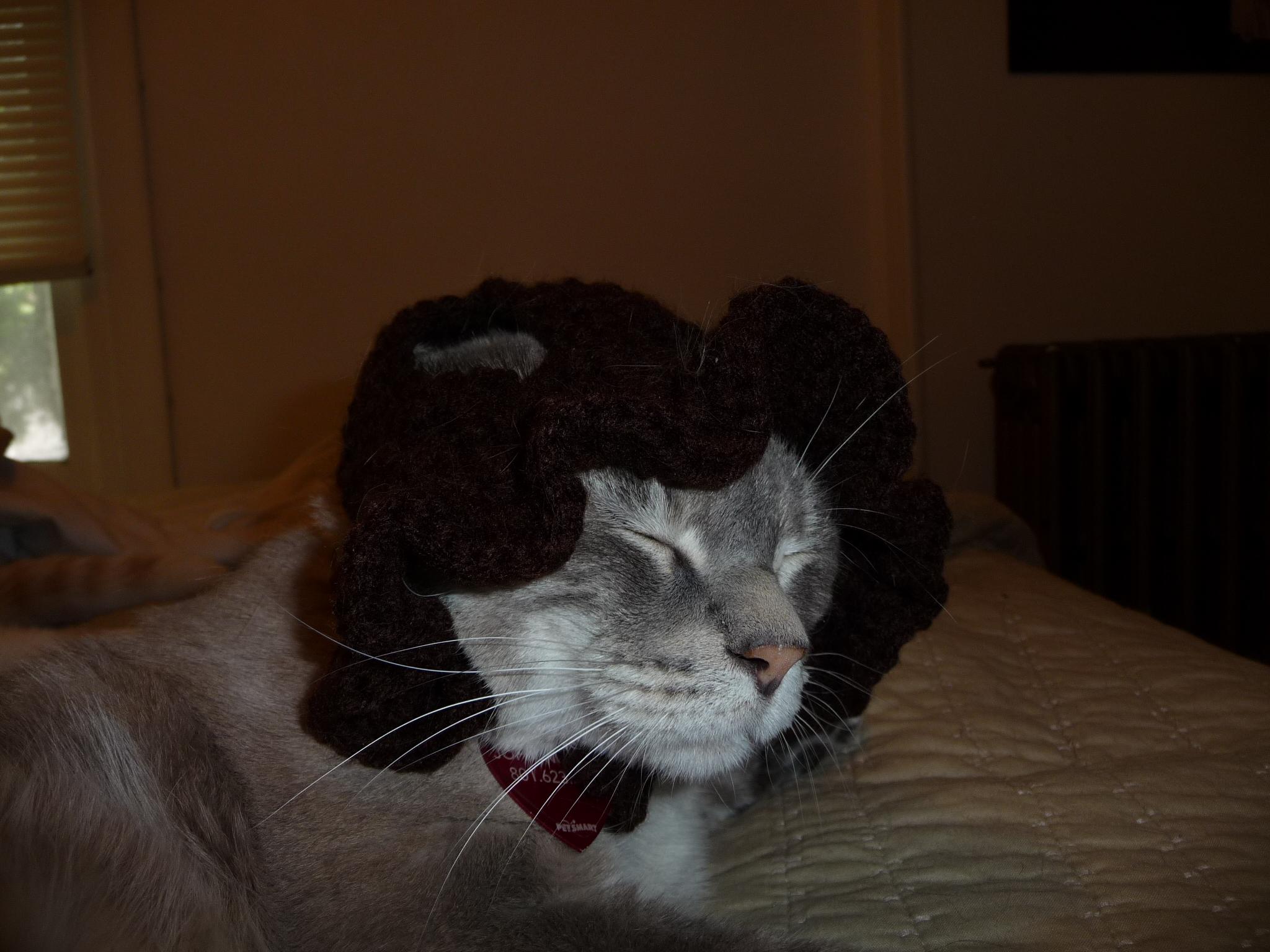 Skimbleshanks and bonnet