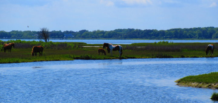 The famous Island horses
